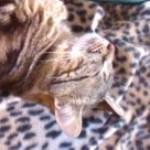 Illustration du profil de Mimi